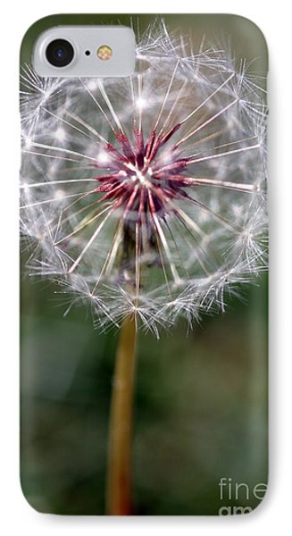 IPhone Case featuring the photograph Dandelion Seed Head by Henrik Lehnerer