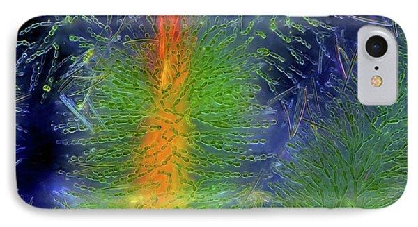 Diatoms On Red Algae IPhone Case by Marek Mis