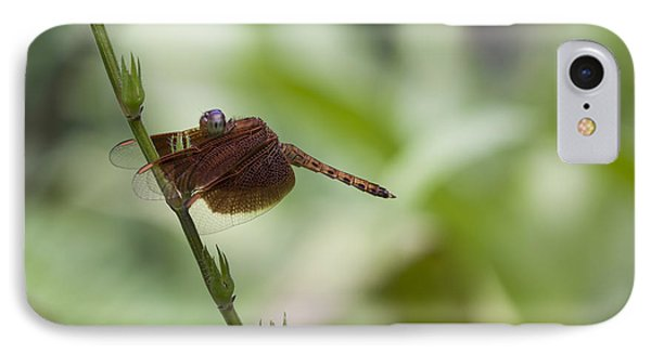 IPhone Case featuring the photograph Dragonfly by Zoe Ferrie
