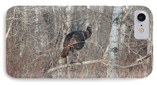 Eastern Wild Turkey IPhone Case by Linda Freshwaters Arndt