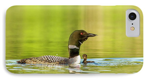 Female Common Loon With Newborn Chick IPhone Case