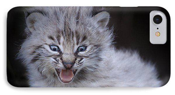 Fierce Little Bobcat IPhone Case by Sharon Ely