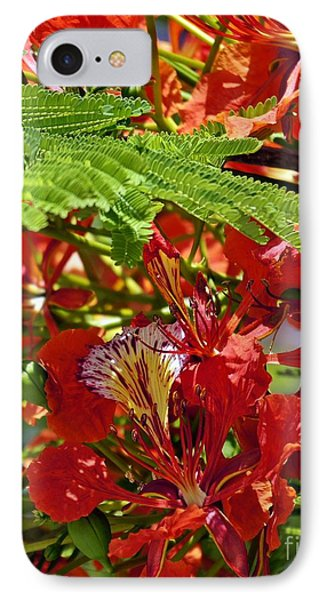 IPhone Case featuring the photograph Flamboyan by Lilliana Mendez