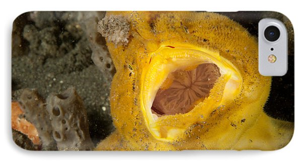 Frogfish With Large Lure, Open Mouth Phone Case by Steve Jones