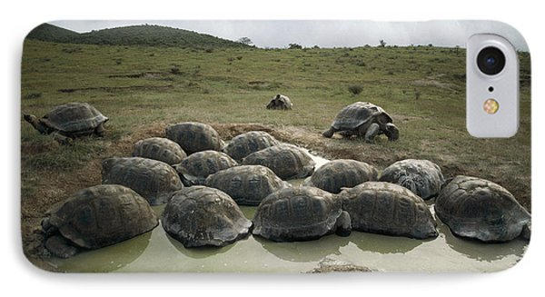 Galapagos Giant Tortoises Wallowing Phone Case by Tui De Roy