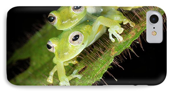 Glass-frogs Mating IPhone Case by Dr Morley Read
