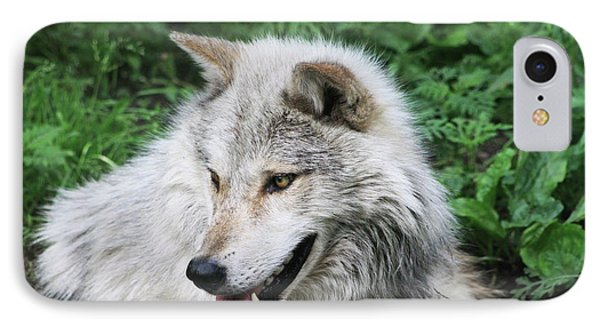 IPhone Case featuring the photograph Gray Wolf by Alyce Taylor