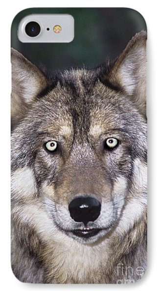 Gray Wolf Portrait Endangered Species Wildlife Rescue IPhone Case by Dave Welling