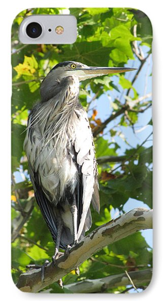 IPhone Case featuring the photograph Great Blue Heron by Anita Oakley