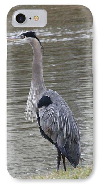 Great Blue Heron IPhone Case by Jeanne Kay Juhos