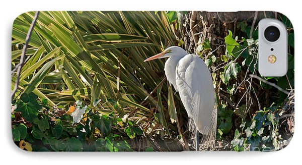 IPhone Case featuring the photograph Great Egret by Kate Brown