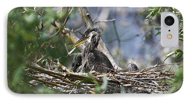 Grey Heron (ardea Cinera IPhone Case by Martin Zwick