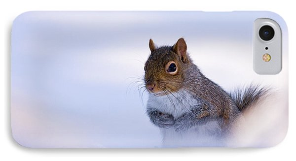 Grey Squirrel In Snow IPhone Case by Jeff Sinon