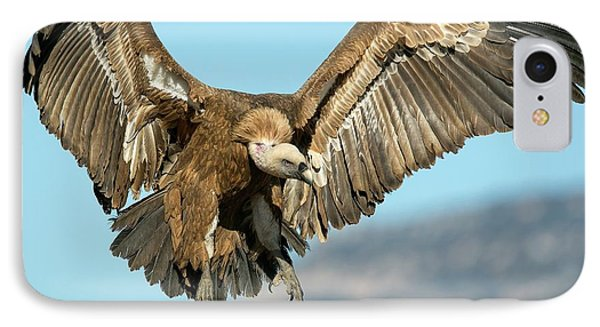 Griffon Vulture Flying IPhone Case by Nicolas Reusens