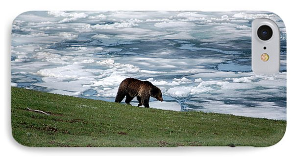 IPhone Case featuring the photograph Grizzly Bear On Frozen Lake Yellowstone by Shawn O'Brien