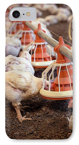 Hens Feeding From A Trough IPhone Case by Aberration Films Ltd