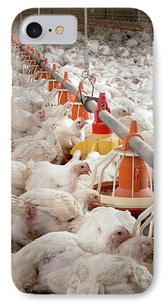Hens Feeding From Plastic Containers IPhone Case by Aberration Films Ltd