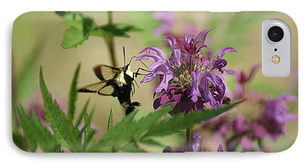Hummingbird Moth IPhone Case by Rick Friedle