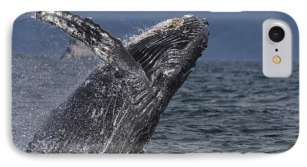 Humpback Whale Breaching Prince William IPhone Case