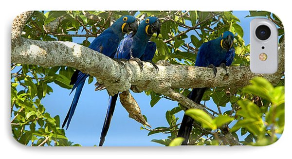 Hyacinth Macaws, Brazil IPhone Case by Gregory G. Dimijian, M.D.