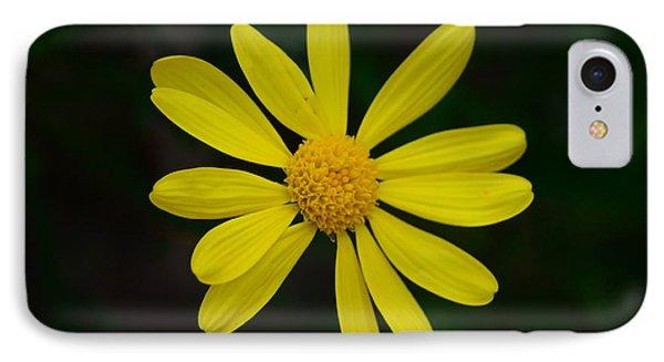 Isolated Daisy IPhone Case by Debra Martz