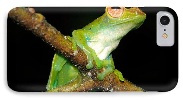 Jade Tree Frog, Malaysia IPhone Case by Fletcher & Baylis