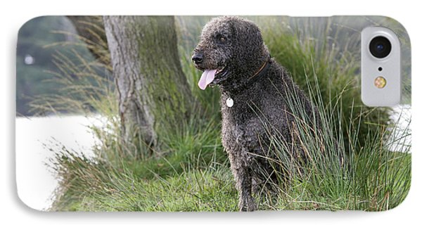 Labradoodle Dog IPhone Case
