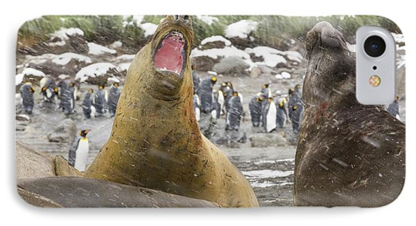 Large Bull Southern Elephant Seal IPhone Case by Ashley Cooper