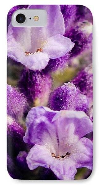 Lavender IPhone Case by Cathy Donohoue