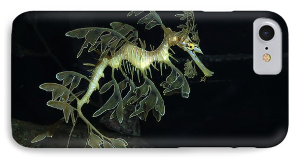 Leafy Seadragon IPhone Case by Gregory G. Dimijian
