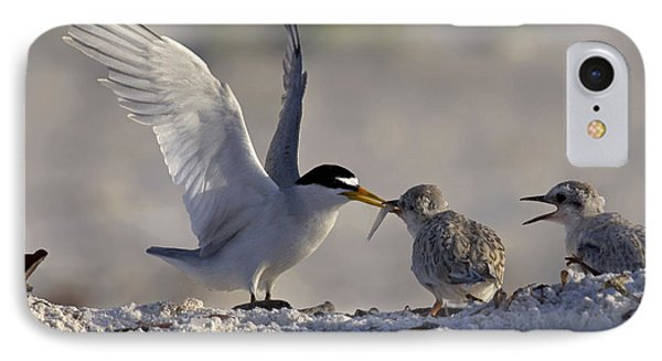 Least Tern Feeding It's Young IPhone Case by Meg Rousher