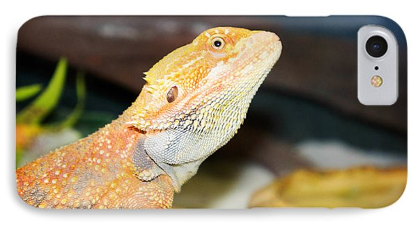 lizard Bearded Dragon IPhone Case by Celestial Images