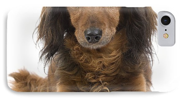 Long-haired Dachshund Phone Case by Jean-Michel Labat