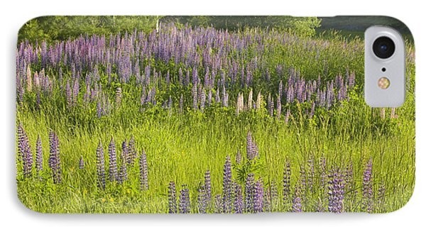 Maine Wild Lupine Flowers IPhone Case by Keith Webber Jr