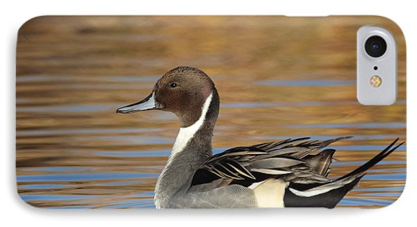 Male Pintail IPhone Case by Ruth Jolly