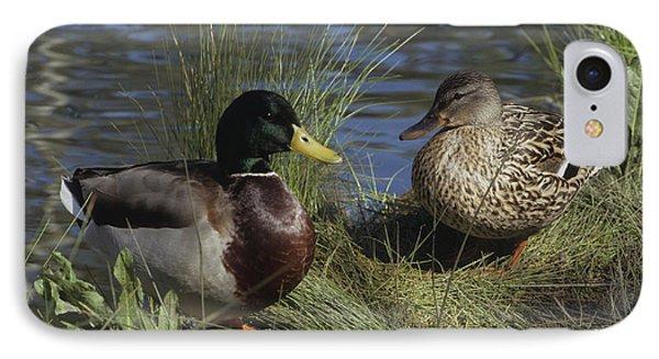 Mallard Duck Pair IPhone Case