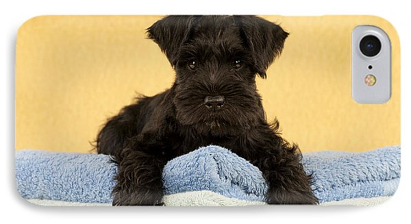 Miniature Schnauzer Puppy IPhone Case by John Daniels