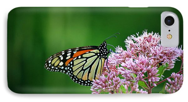 Monarch In Light  IPhone Case by Neal Eslinger