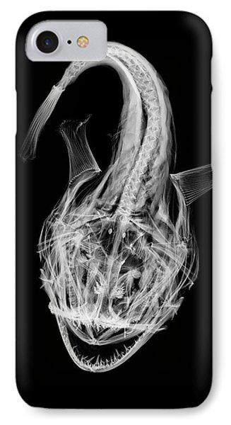 Monkfish IPhone Case by D. Roberts