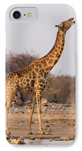 Namibia, Etosha National Park, Klein IPhone Case