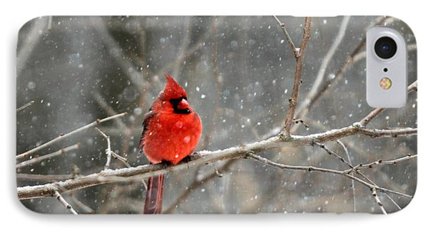 Northern Cardinal IPhone Case by Clare VanderVeen