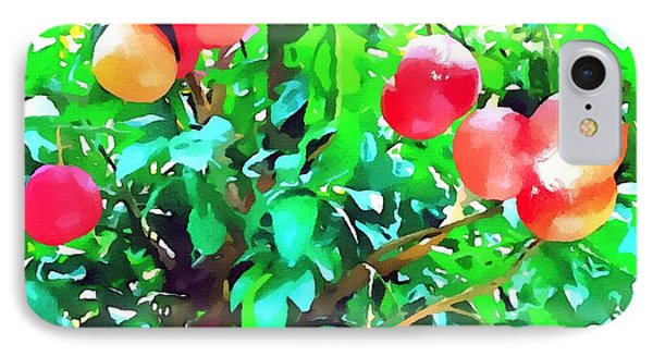 Orange Trees With Fruits On Plantation Phone Case by Lanjee Chee