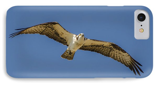 Osprey In Flight Spreading His Wings IPhone Case by Dale Powell