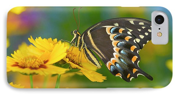 Palmedes Swallowtail, Papilio Palmedes IPhone Case by Darrell Gulin
