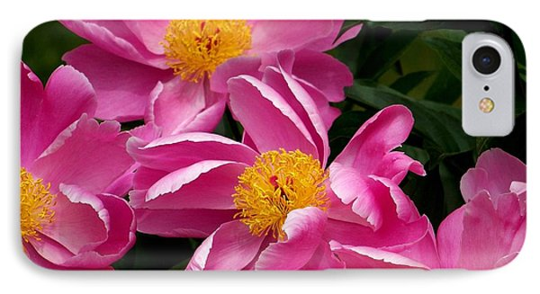 Pink Petals IPhone Case by Eunice Miller