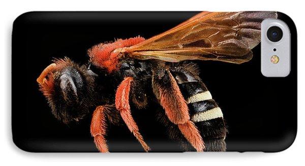 Plasterer Bee IPhone Case