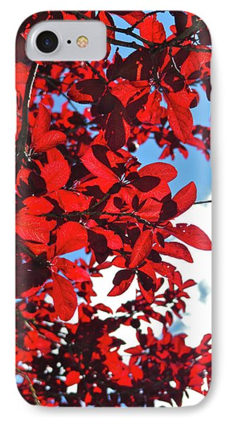 Plum Tree Cloudy Blue Sky 3 IPhone Case by CML Brown