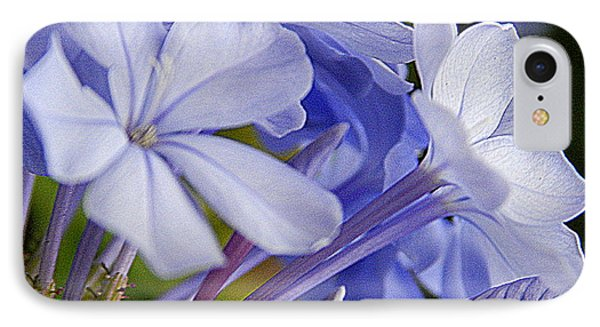Plumbago Summer Solstice In New Orleans Louisiana Phone Case by Michael Hoard