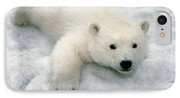 Polar Bear Cub Playing In Snow Alaska IPhone Case by Mark Newman