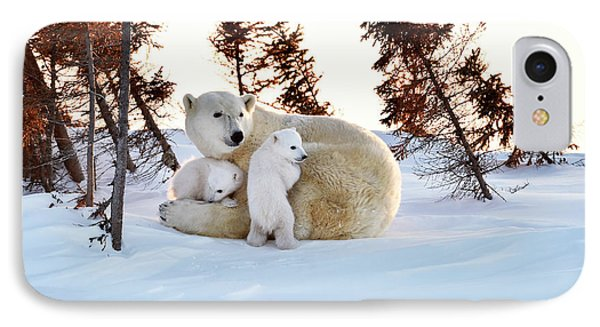 Polar Bear Mother And Cubs IPhone Case by Dr P. Marazzi